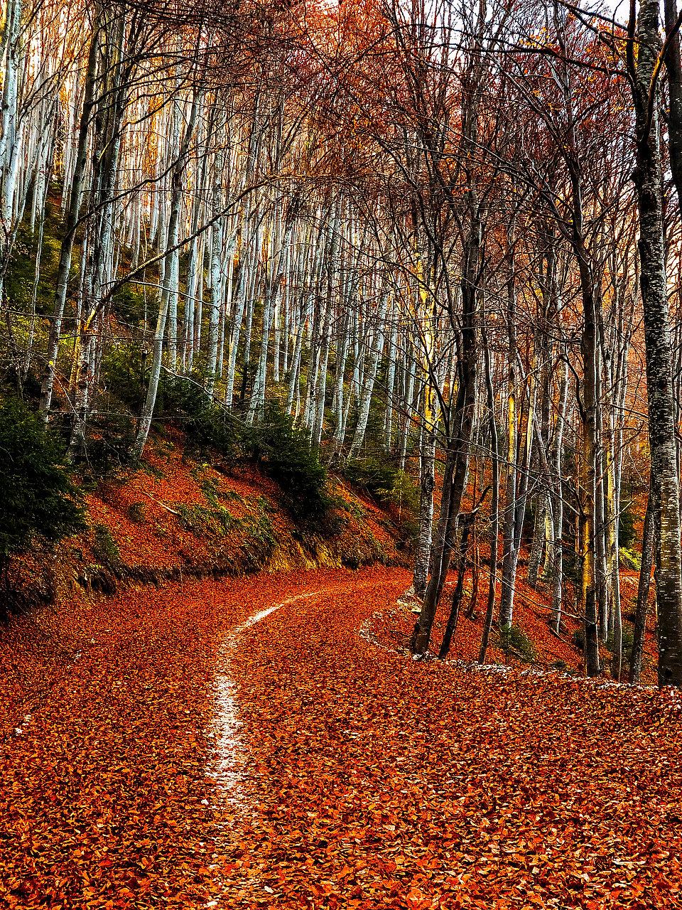 Poiana Brasov daniel ceapa fotograf locatie exterior munte plimbare bicicleta poteca traseu montan toamna anotimp culoare